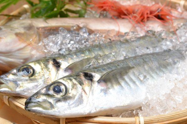 魚は、天然物の小さめのものを推奨。イワシなど。DHAが豊富な青魚が特に良い。