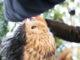 「嚴島フクロウの森」と「嚴島ひょう猫の森」に行ってきた。